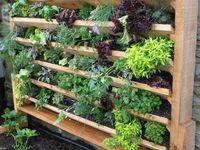 Vertical gardens  Board