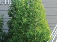 michigan evergreen nursery memorial day sale