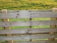 dog fence / shed ideas