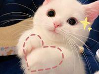Like you~SHEIN loves cute animals too~ PETSIN  Board