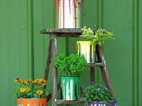 Outdoor and garden plants