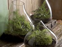 Vessels, Living Walls, Inspired Containers, Water Gardens, etc.