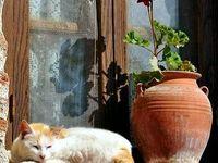 The humble geranium...
