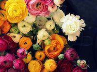 Flower and Floral Inspirations