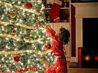 Arbres de Noël /Christmas tree