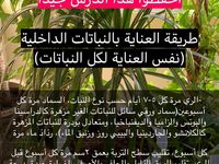Pin By Mona Ahmed On نباتات Fruit Plants Garden Care Useful Life Hacks