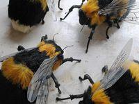 Bumble and Honeybees;Worth Saving!