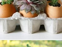 Creative garden ideas / Different, interesting, creative ideas for indoor and outdoor gardens