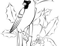 1000 Images About Birds On Pinterest Cardinals Free