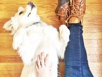 Dogs love L.L.Bean. And we love dogs. #LLBeanPets L.L.Bean Dogs  Board