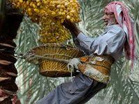Marsh Arabs Maadan Ahwar South Irak Marshland Traveller S Tales Iraq
