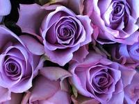 Purple is my Style