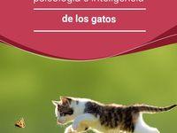 psicología felina