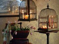 bird, aviary, nature, birdcage