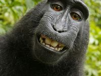 Photographs of #animals #mammals #wildlife #gorillas #rhinos #elephants #horses #cats #lions #primates.  Does NOT include marine mammals (polar bears, seals etc.)