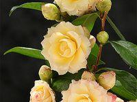 ボード 花 のピン