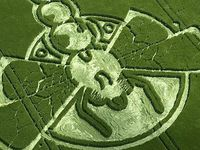 Crop circles are patterns that appear in fields. The pattern is created when certain areas of the crops are tamped down, but others are left intact. The edge is so clean that it looks like it was created with a machine. Even though the stalks are bent, they are not damaged. Most of the time, the crop continues to grow as normal.