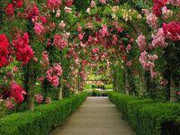 Garden Gate * Arbor