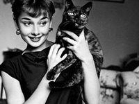 「Actress」のアイデア 900+ 件 | 女優, オードリー・ヘップバーン, 白 ...