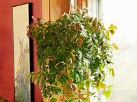 786ec18f071c9202a02c8c65907e03ed Palm Houseplants Safe For Cats on safe indoor plants for cats, safe herbs for cats, safe outdoor plants for cats, safe vines for cats, safe food for cats,