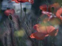 ต้นไม้&ดอกไม้ต่างๆ