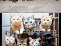 46 лучших изображений доски «Кошки» за 2019 | <b>Pets</b>, <b>Dog</b> cat и ...