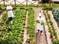 Vegetable Garden Fences