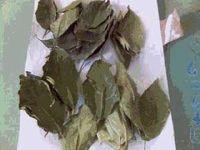 ωμα λαχανικα-συντηρηση-αποξηρανση