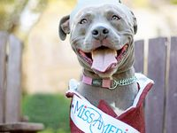 Pit Bulls are AWESOME!!!
