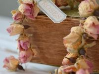Forever Roses - Dried Roses