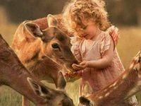 Animals / Wildlife