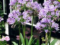 101 Best Quot Perennials Quot Plants That Come Back Every Year