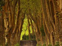 Bridges, Paths, Trails & Roads