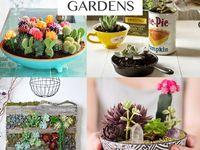 Plants+Garden Ideas