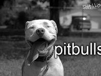 Pitbull Smiles