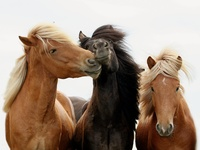Beautiful photos of horses and ponies of all kinds.