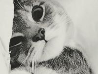 A place for our special friends of the furry animal kind.  Nothing like photos of cuteness to help us through a lazy Saturday