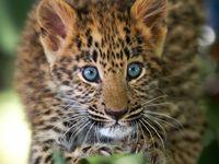 Feline creatures from the wild