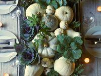 pumpkins, halloween, and such