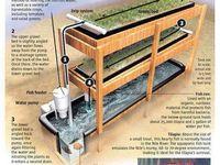 Aqua- Hydrponics & Container Gardens