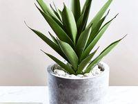 Accessories/Plants