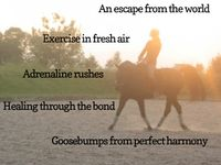 horses and horse care