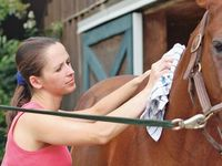 Equine Tips and Care