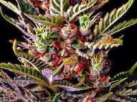 Marijuana and stoner stuff!!