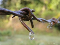 Barbed wire......