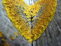 Natural art
