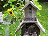 Bird Houses & Nests
