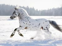 A colletion of pictures that are beautifully equine.