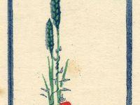 Ex libris (miscellanea)