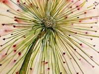 drawing study dandelion